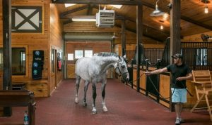 horse boarding near me with best facility