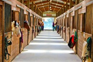 horse boarding service cost you must pay with excellent price