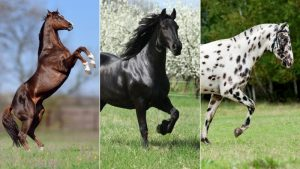 the most expensive horse breeds is arabian horse type