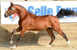 Selle Français Horse Breeds With Brands and Logo
