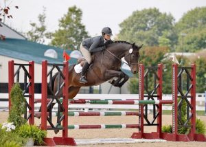 Trakehner Warmblood Horse Brands Use For Show Jumping