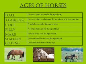 ages of horse