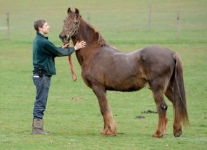 Some Of The World's Oldest Horses (Horse Years)