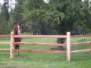 Natural Cedar Horse Fence Ideas.