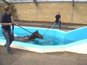 learning how to horse swim